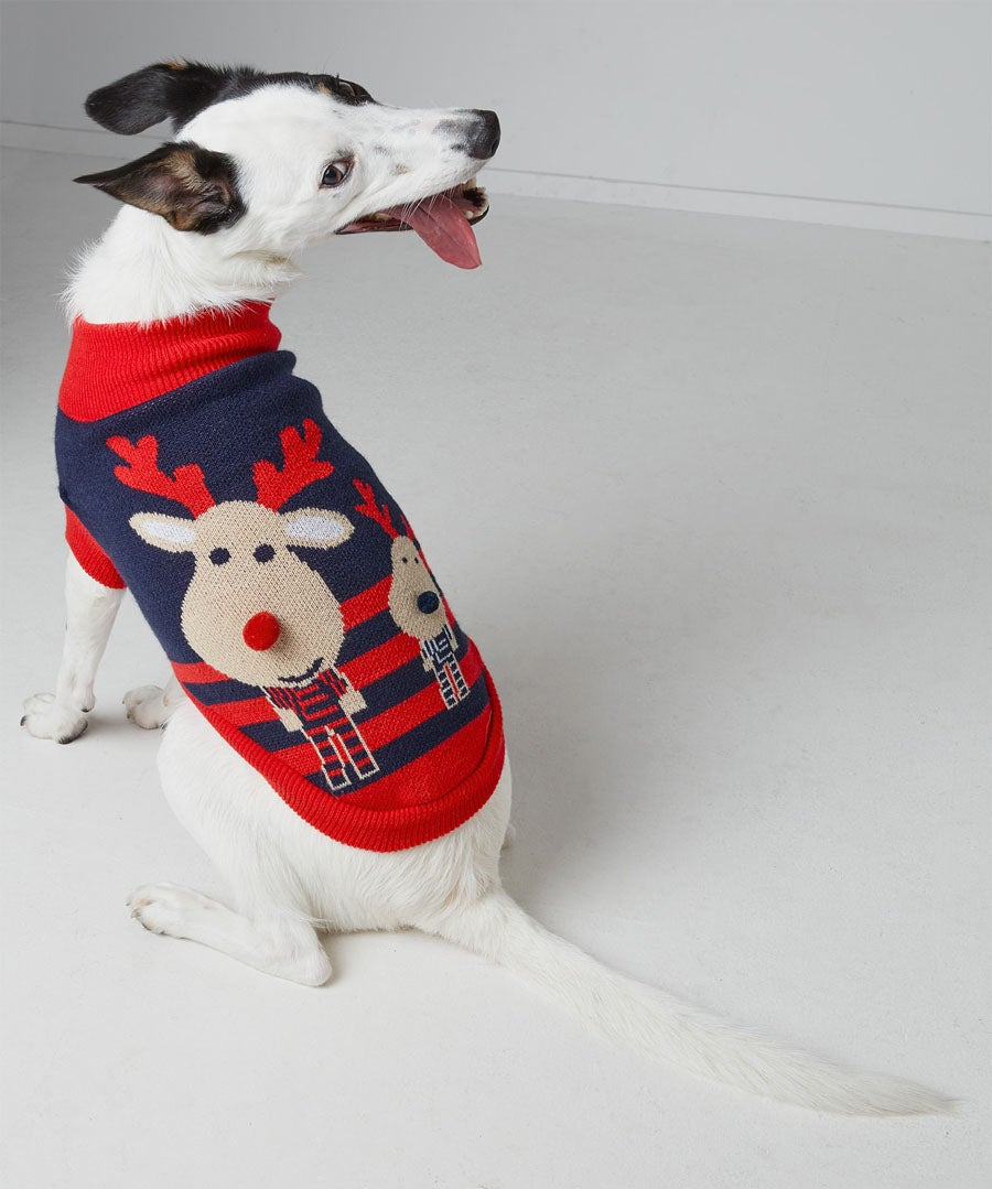 Christmas Pet Jumper Model Front