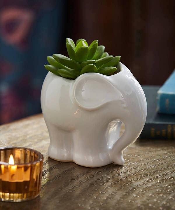 Ceramic Elephant Succulent