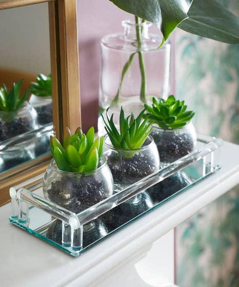 3 Mini Succulent In Glass Tray