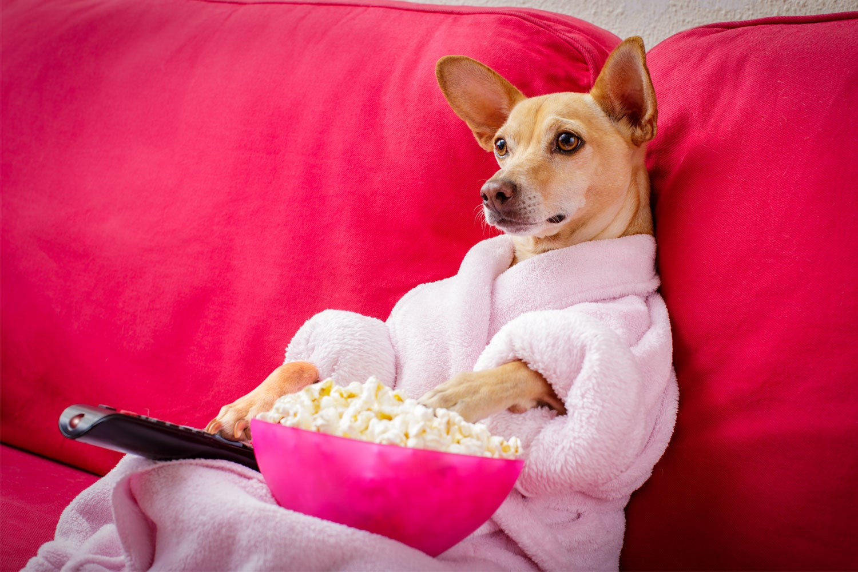 Netflix and binge!